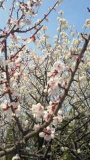 食欲の春!?