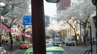 ぶらり高円寺&中野の旅♪桜編☆